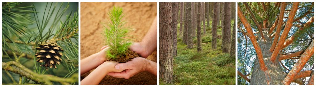 Arctic Forest Products, Inc | About Us